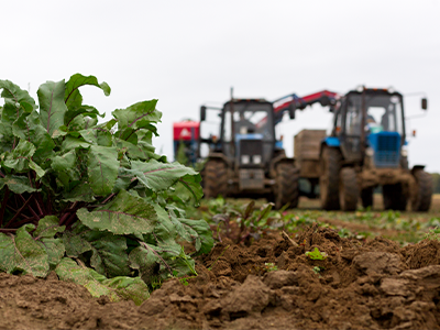beet farming ag products image